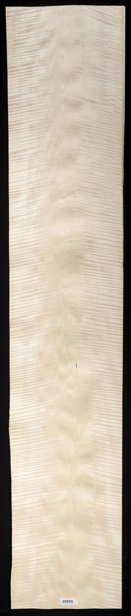Curly English Sycamore Veneer Sheet