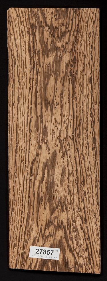 Birds Eye Zebrawood Veneer Lot