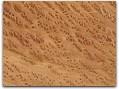 cat-redwood-burl.jpg