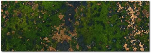 Irish Moss Copper Patina Veneer Sheet